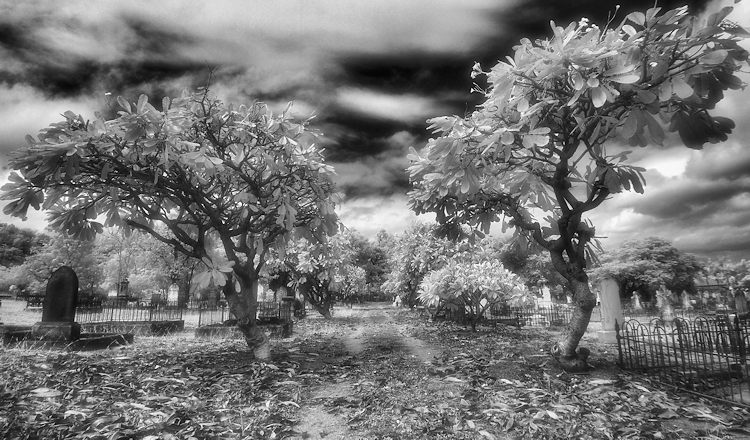 Enhancing your Black and White images with Infrared Photography