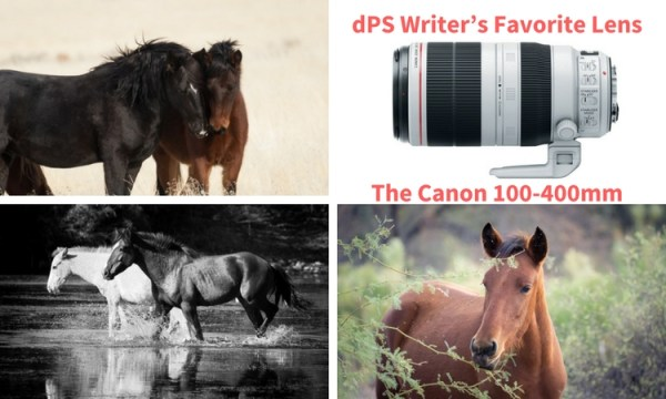 dPS Writer's Favorite Lens – the Canon 100-400mm f/4.5-5.6 L-Series Lens