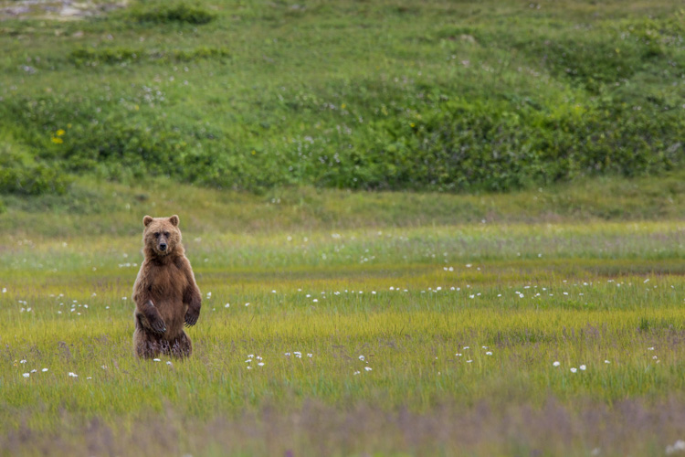 Wildlife in Context - The Short Lens Approach to Wildlife Photography