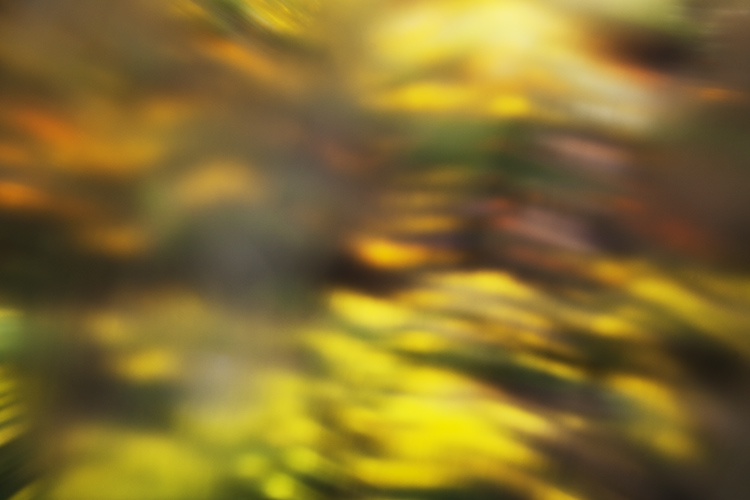 https://i0.wp.com/digital-photography-school.com/wp-content/uploads/2017/03/vaseline-photography-00.jpg?resize=750%2C500&ssl=1