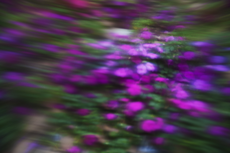 How to Create a Soft-Focus Look With Vaseline