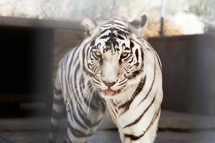 如何在摄影中使用异国动物
