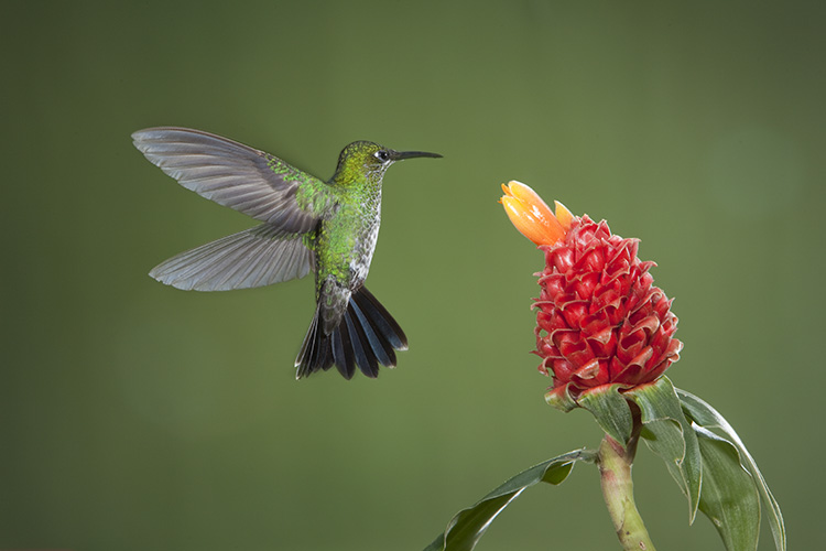 Photograph hummingbirds 02