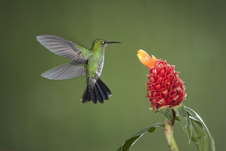 Photograph hummingbirds 02