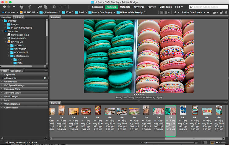 Adobe Bridge - Photoshop Versus Lightroom: Which is Best for Beginners?