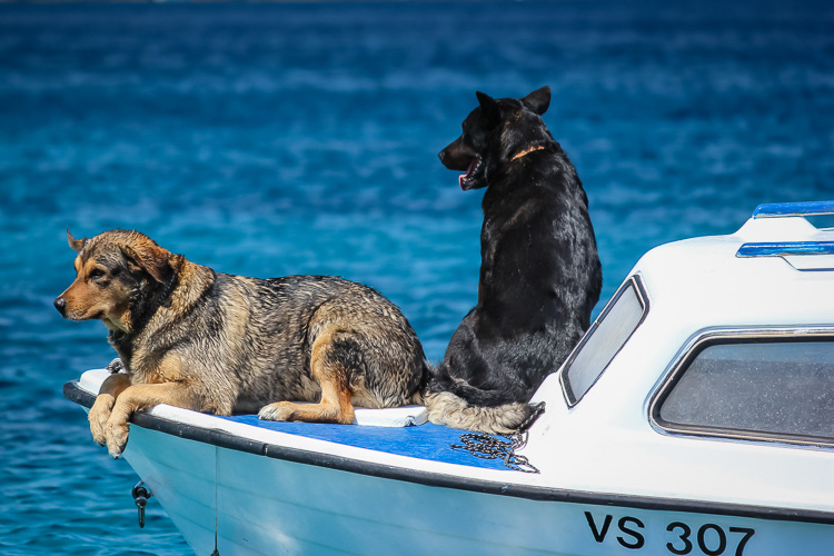 Low Impact Nature Photography - dogs on boat