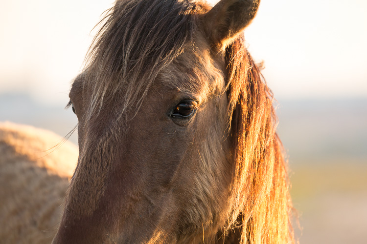 Low Impact Nature Photography - cautious wild horse