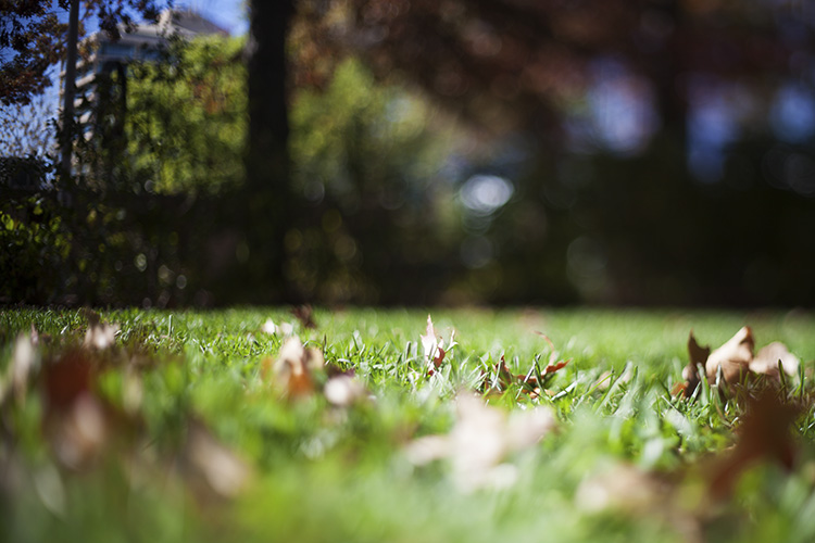 How to do Freelensing for Budget Tilt-Shift Photography