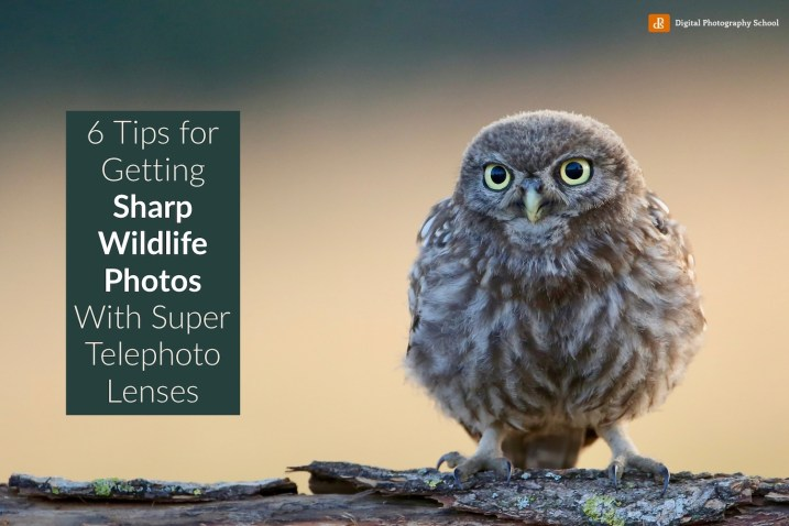 6 Tips for Getting Sharper Wildlife Photos With a Super Telephoto Lens