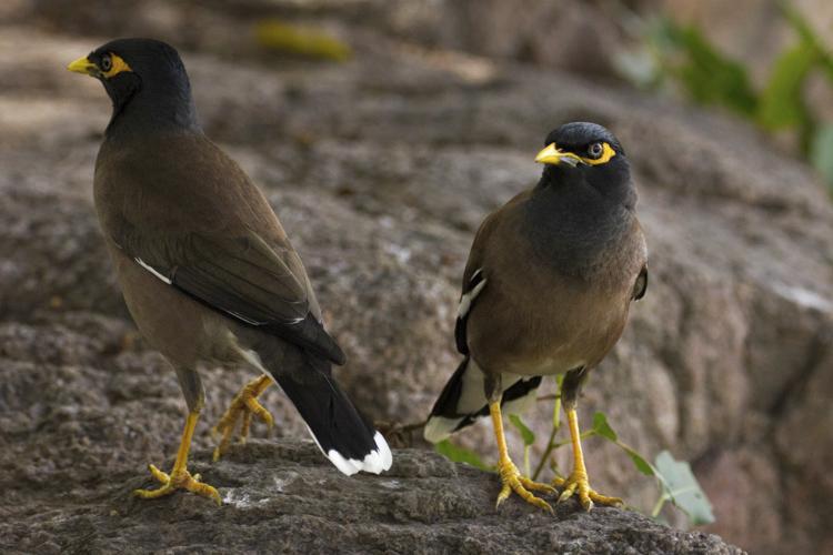 Wildlife photography telephoto lens 02