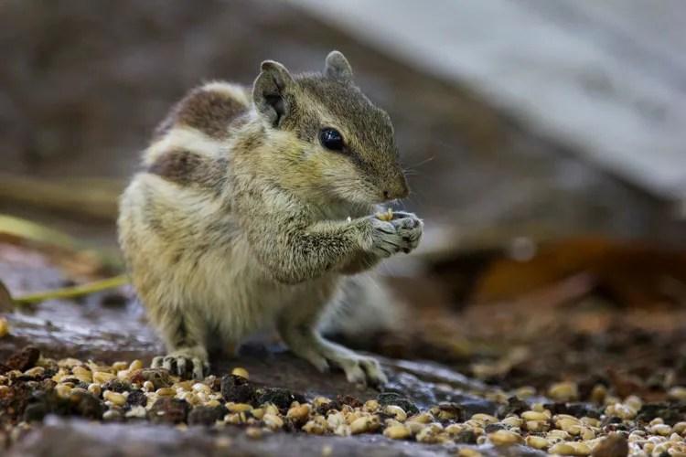 tirar fotos super nitidas - esquilo somento