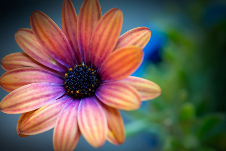 7 Different Ways to Approach Macro Photography - orange flower