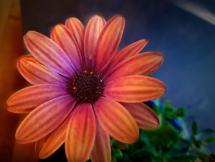 7 Different Ways to Approach Macro Photography