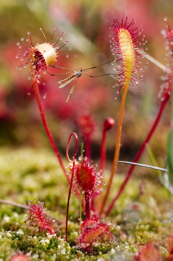 5 Quick Tips for Outdoor Macro Photography