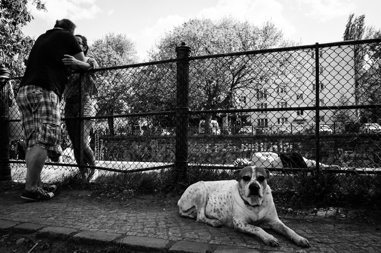 Dog Days What is the Decisive Moment