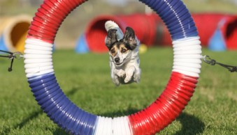 How to Photograph Agility Events and Other Dog Sports