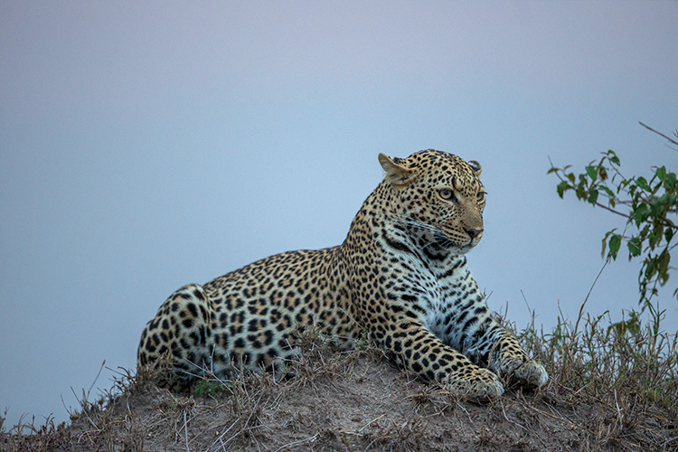 Tips for Why and How to do Wildlife Photography at Eye-Level