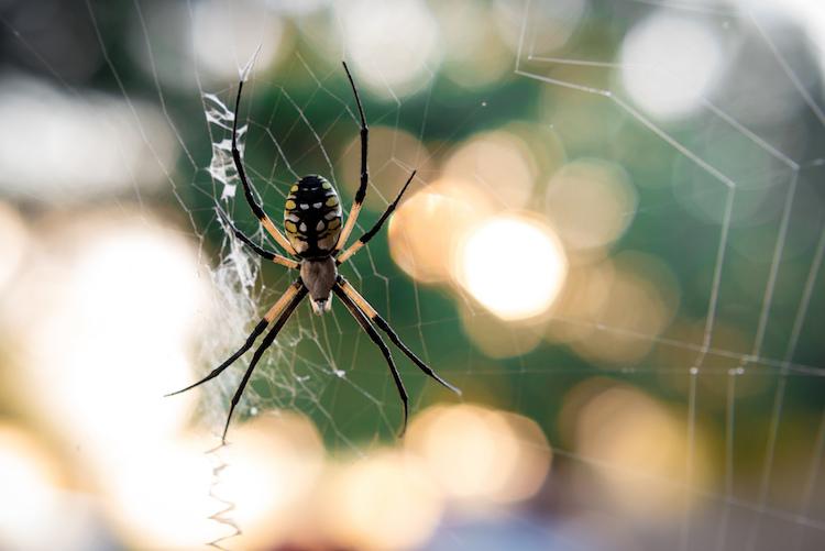 https://i0.wp.com/digital-photography-school.com/wp-content/uploads/2017/10/50mm-lens-wildlife-photography-garden-spider-sunset.jpg?resize=750%2C501&ssl=1