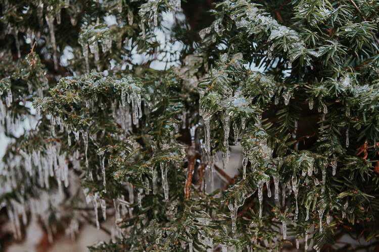 Pine Tree in ice - How to Take Interesting Photos in Uninteresting Places