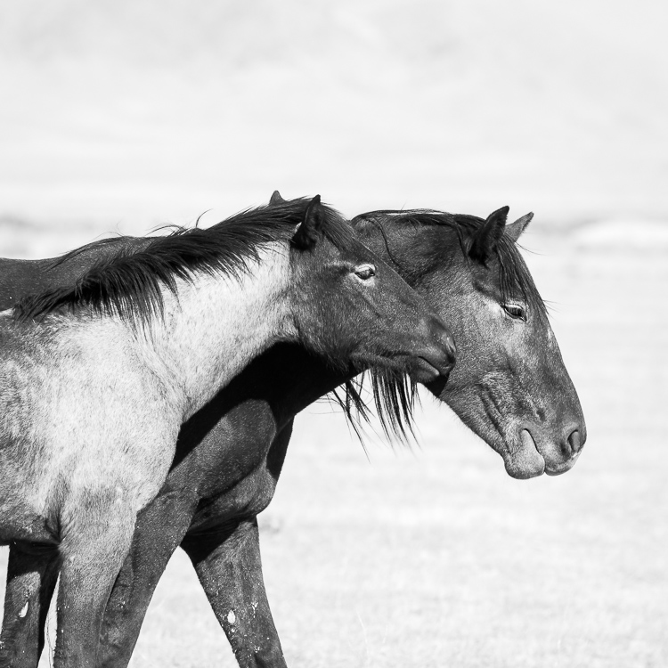 Photography Conference Tips - wild horses