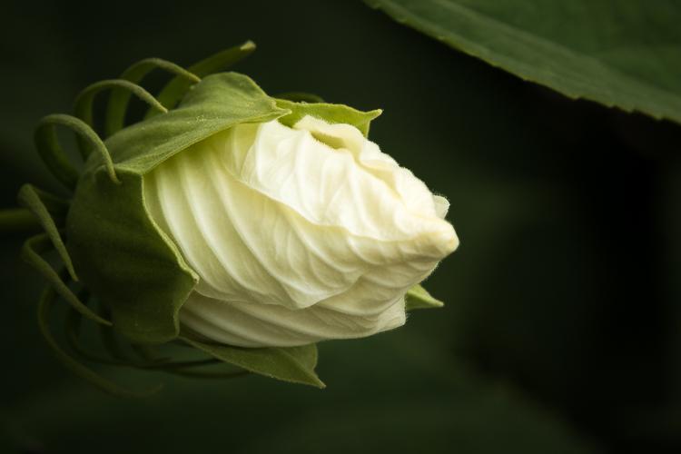 Tamron 18-400mm - White bud