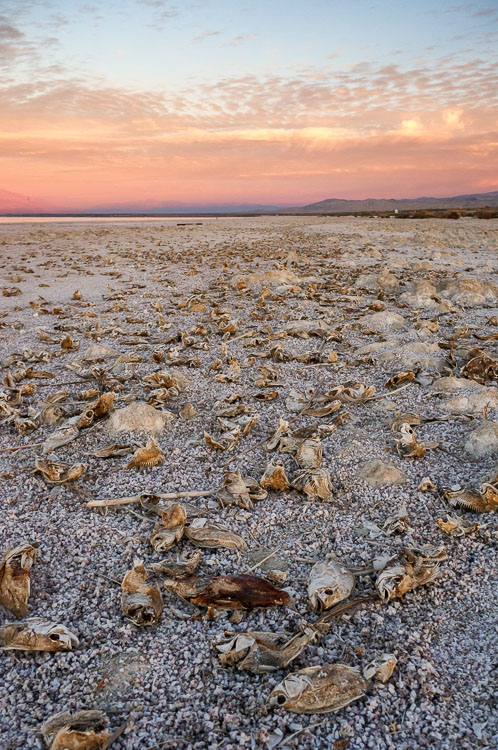 Salton Sea Tilapia by Anne McKinnell - How to Make Storytelling Landscape Photos - 4 Steps