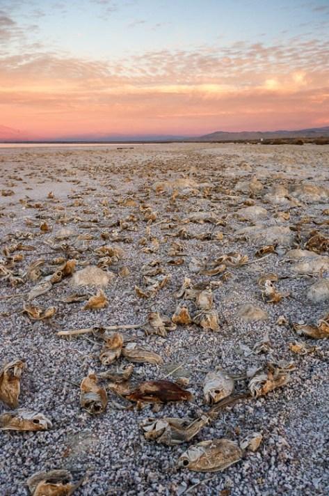 索尔顿罗非鱼(Salton Sea Tilapia),Anne McKinnell-如何制作讲故事的风景照片-4个步骤