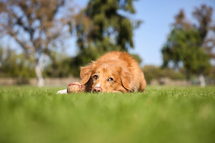 Working with Unruly Animals in Pet Photography