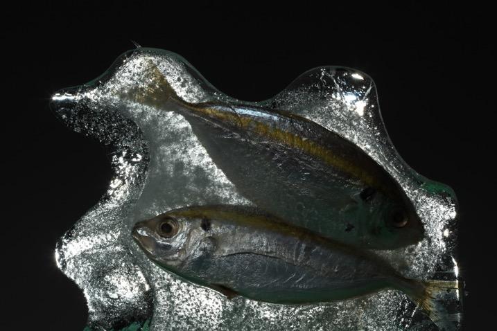 9种引人注目的水上摄影创意