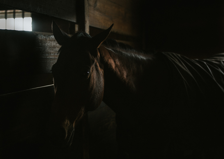 Dark and Moody Lifestyle Equestrian Photos - Rocking the Photography Equipment You Currently own Versus Buying New Gear