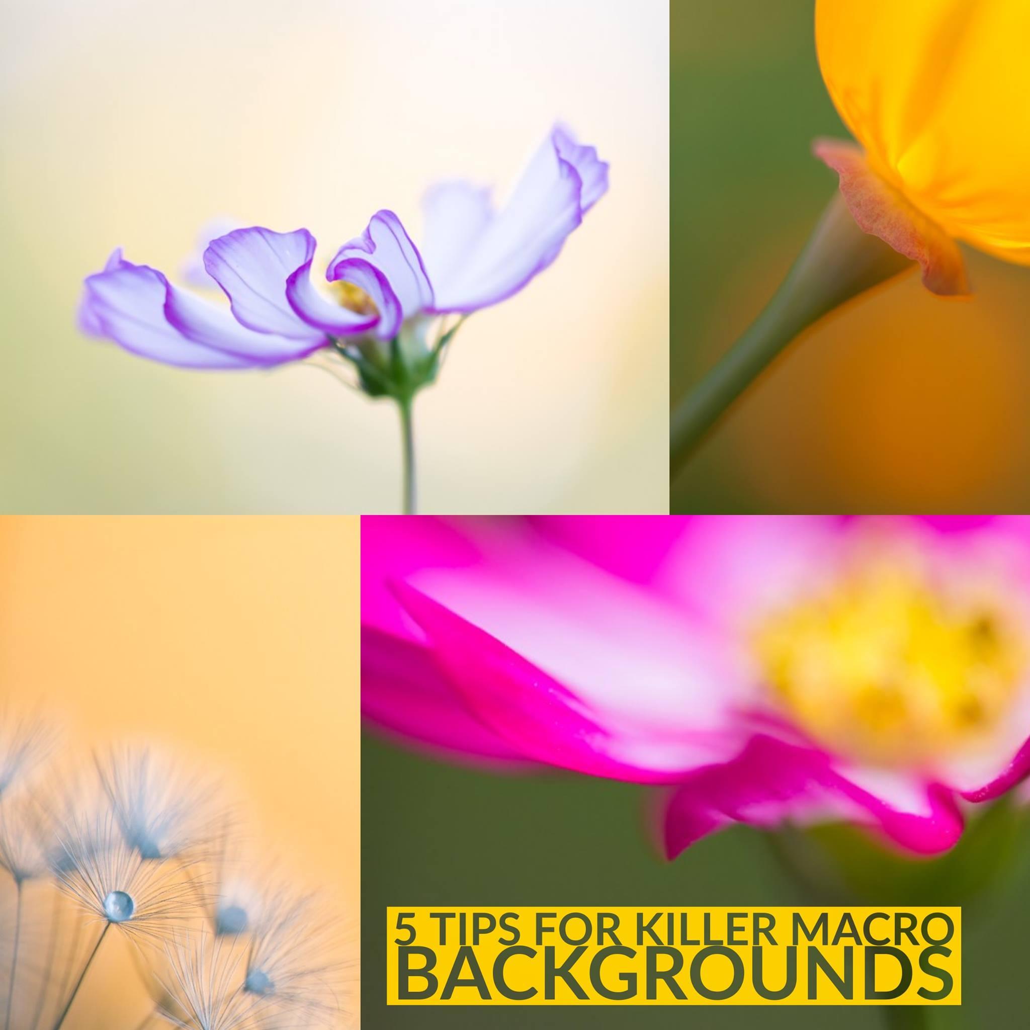 5 Tips for Killer Macro Backgrounds