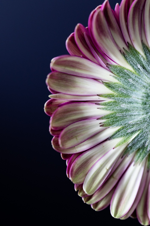 dPS Writer's Favourite Lens: Canon 100mm Macro
