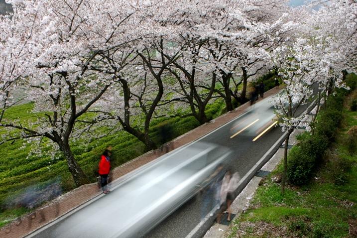 春季摄影的五个想法