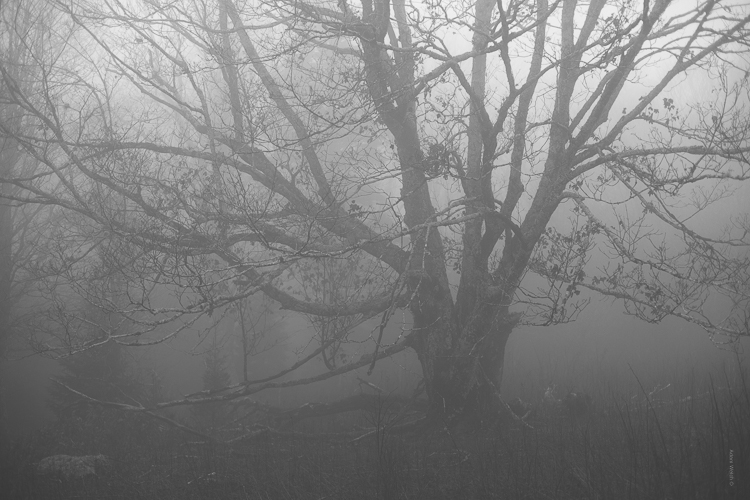 How to Control Mood in Your Foggy Photos - b/w tree