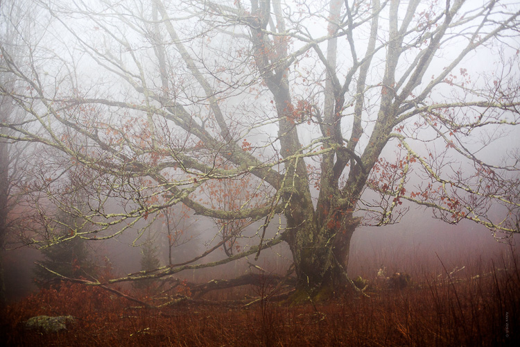 How to Control Mood in Your Foggy Photos - higher contrast tree image