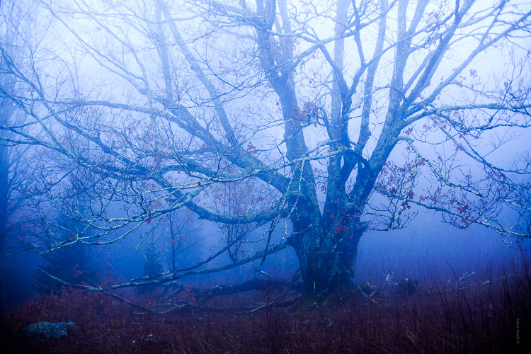 How to Control Mood in Your Foggy Photos - cool image of a tree