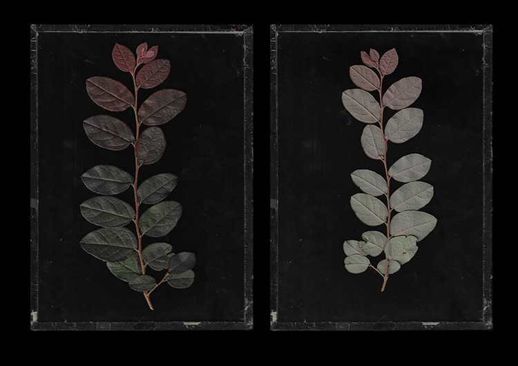 How to Create Images of Plants With Scanography