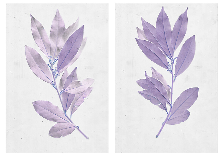 Using Scanography to Create Images of Plants