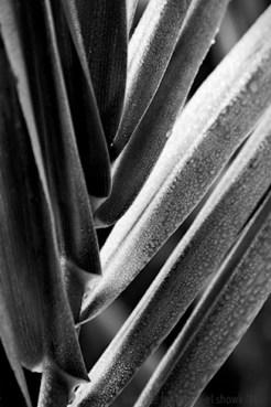 11b_plant-photography-tips.jpg