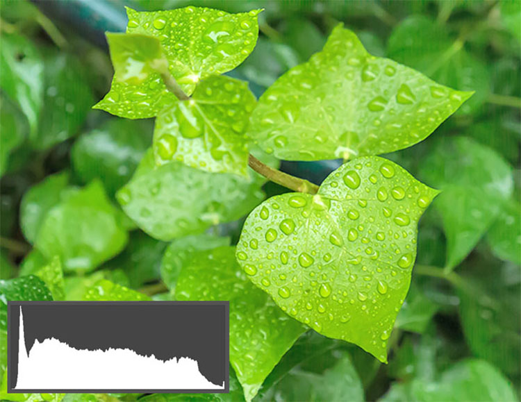 Corrected Dark Green Leaves2 - Shedding Light on the Histogram - How to Use it in Post-Production