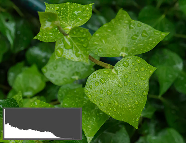 Dark Green Leaves2 - Shedding Light on the Histogram - How to Use it in Post-Production