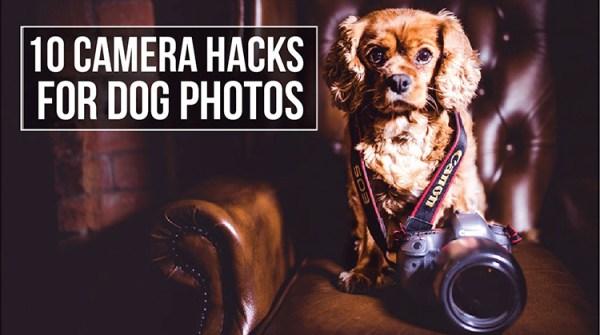 10 Amazing Camera Hacks for Better Dog Photography
