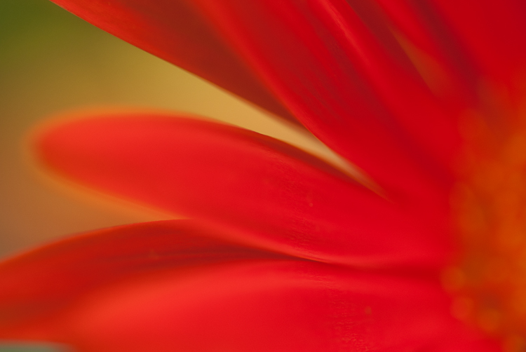 macro photography flower abstract - Five Simple Exercises to Improve your Photography