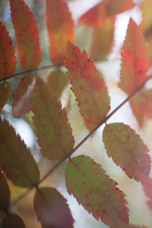 autumn leaves freelensed macro