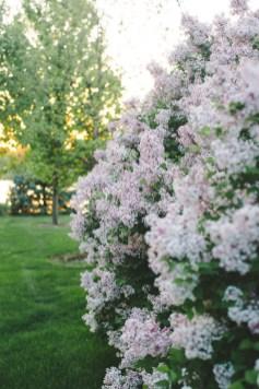 Karthika Gupta Photography - Memorable Jaunts DPS Article 6 ways to photograph spring-7