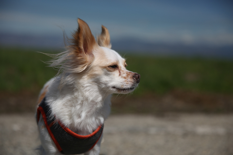 Review of the Tiffen Variable Neutral Density Filter - white dog in the sun