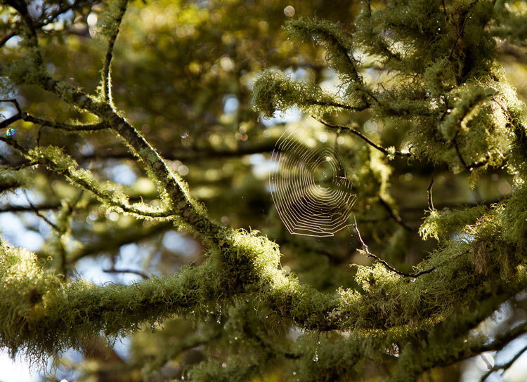 spider web in a tree - Composition Checklist for Beginners