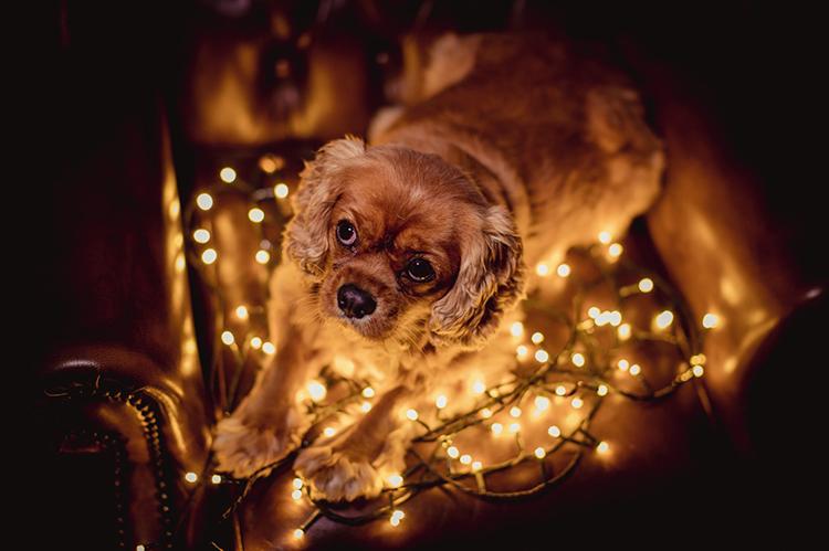 Dog on fairy lights - 10 Amazing Camera Hacks for Dog Photography