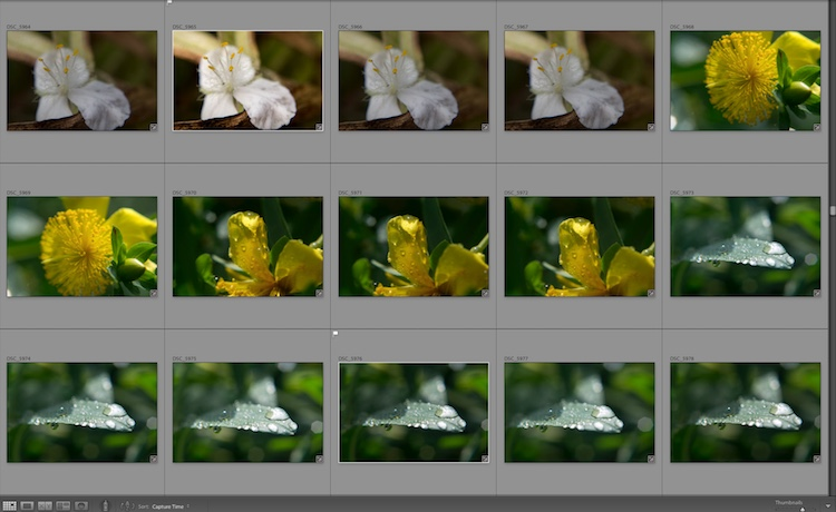 4 Tips to Organize Your Photos in Lightroom - thumbnail images