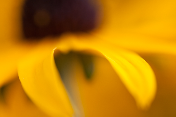 macro photography abstract flower yellow - Post-Processing Workflow